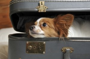 planning for your trip with dog