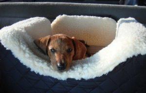 pet in car seat