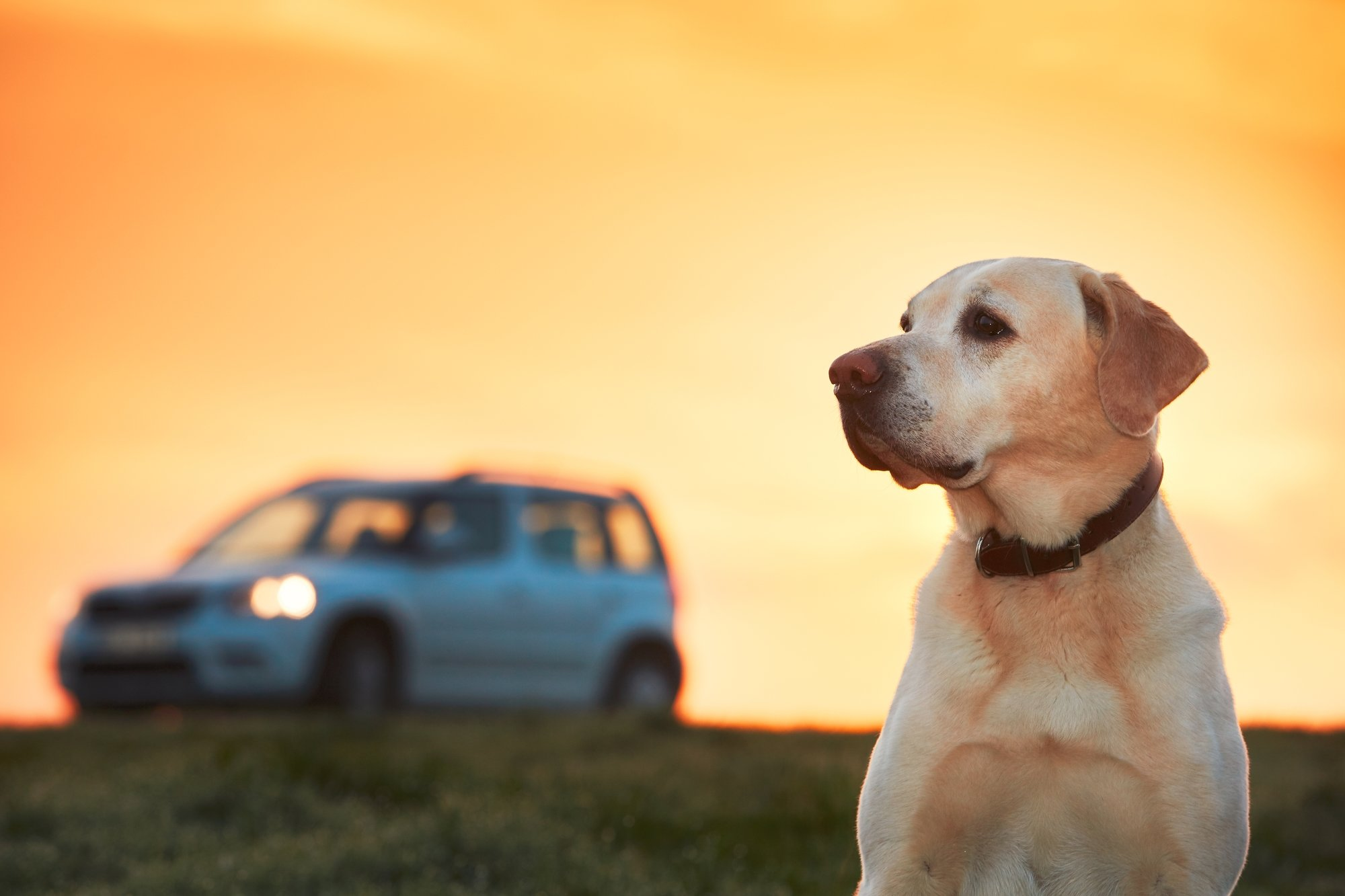long trip with your dog