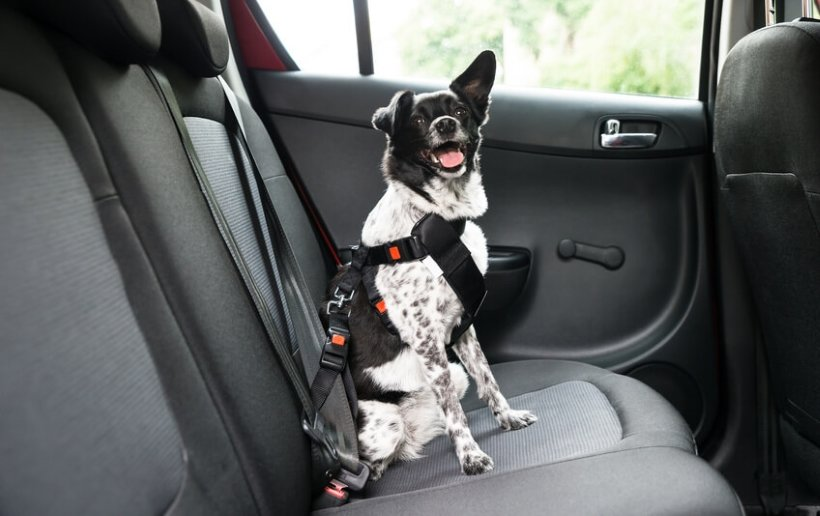 Dog Car Travel Safety